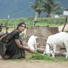 Lara Dutta feeding goats | Billu Barber Photo Gallery