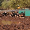 India's First Time organizes 'Mud Rush' in Kolad