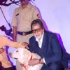 Amitabh Bachchan at the Pawsitive People's Awards
