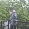 Shah Rukh Khan climbs up the fence to blow a flying kiss to his fans
