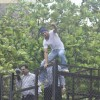 Shah Rukh Khan climbed up the fence to Wave Out to his Fans on Eid