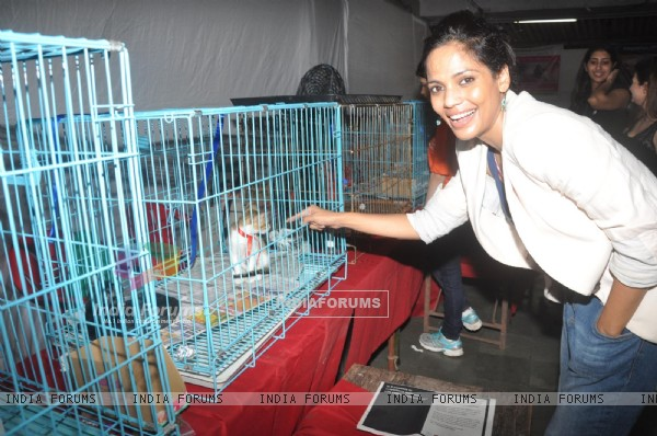 Celebrities attend Pet Adoption 2013