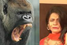 'Gorilla' creates pandemonium the sets of Thapki...Pyaar Ki!