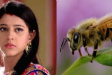 Honey Bee attack on Kaala Teeka!